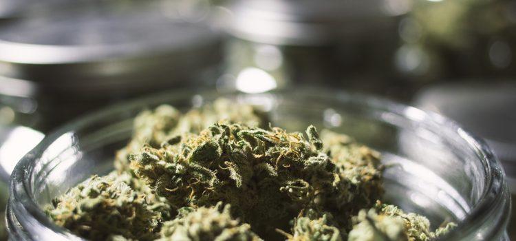 So Like Candy – Medical Marijuana Curing