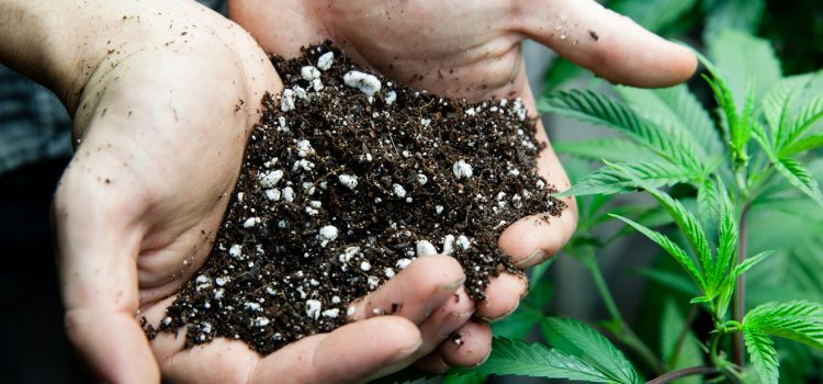 Looking For A Veganic Bagged Soil