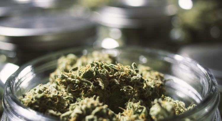 Medical Marijuana News